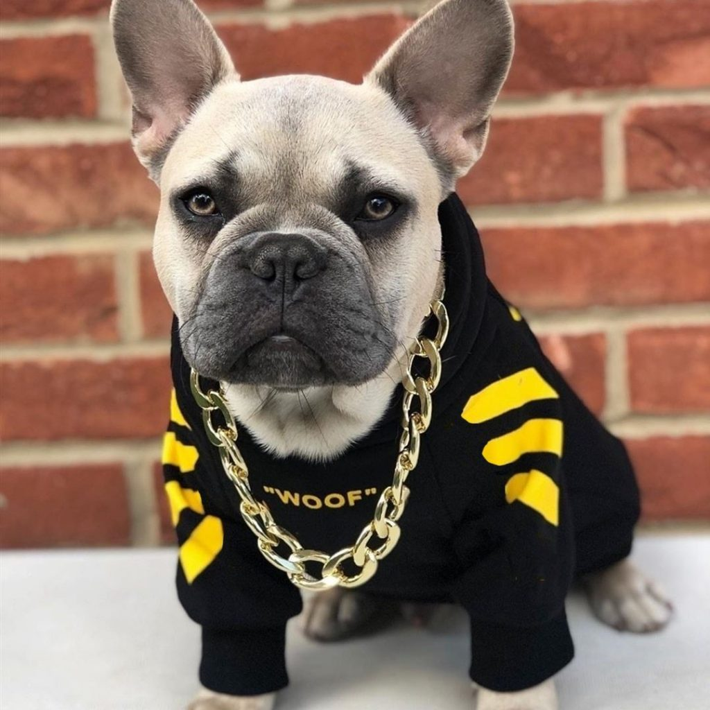 online pet dressing
